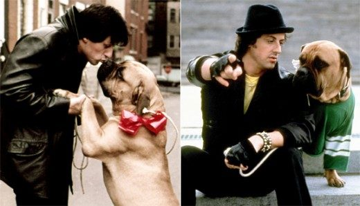 Before Sylvester Stallone sold the script for Rocky, he was homeless and sold his dog for $50