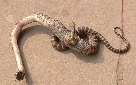 A snake with a foot was found in China.