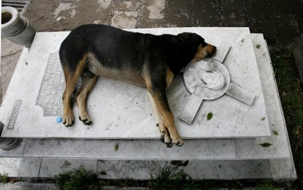 A Dog named Capitan sleeps next to the grave of his owner every night at 6pm. His owner, Miguel Guzmán died in 2006.