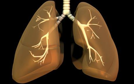 Human lungs also have taste buds and might be the cure for asthma