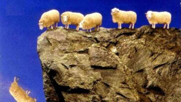 sheep jump from cliff